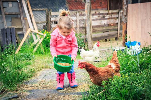 La granja escuela: aprender divirtiéndose el medio rural