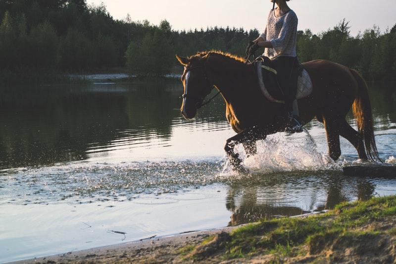 Excursiones a caballo por la Sierra de Madrid